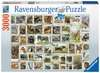 ZNACZKI POCZTOWE - ZWIERZĘTA 3000EL Puzzle;Puzzle dla dorosłych - Ravensburger