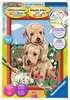 Knuffelende puppies Hobby;Schilderen op nummer - Ravensburger