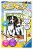 Schattige puppies Hobby;Schilderen op nummer - Ravensburger
