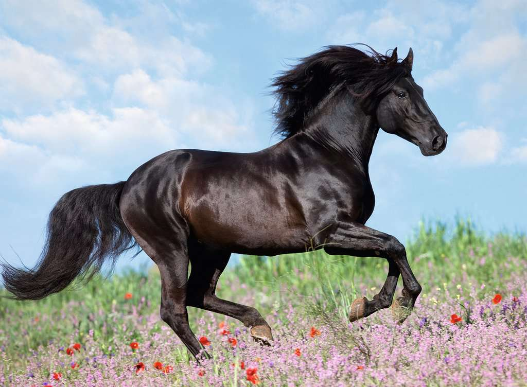 Beautiful Horse Lasten Palapelit Palapelit Produkte Fi Beautiful Horse