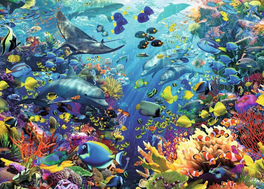 Underwater paradise image 3 click to zoom - Fotos fondo del mar ...