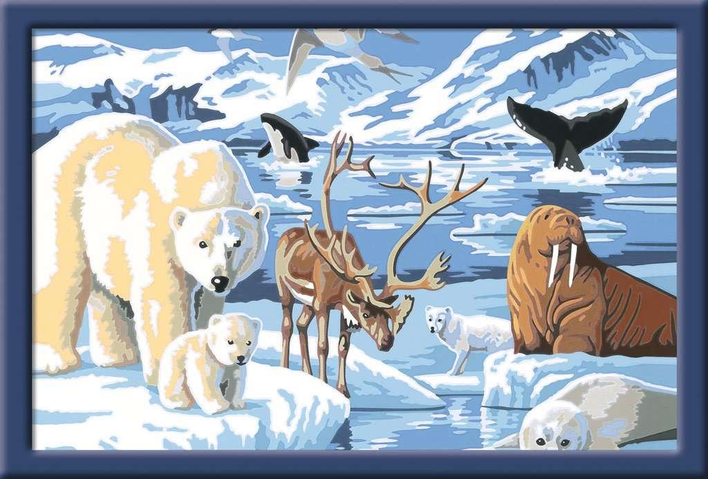 Tiere Der Arktis Malen Nach Zahlen Malen Und Basteln Produkte