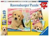 Puzzles 3x49 p - Mignons petits chiots Puzzle;Puzzles enfants - Ravensburger