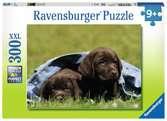 Labrador pups Puzzels;Puzzels voor volwassenen - Ravensburger