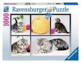 Chatons British Shorthair Puzzle;Puzzle adulte - Ravensburger