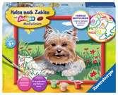 Kleiner Yorkshire Terrier Malen und Basteln;Malen nach Zahlen - Ravensburger