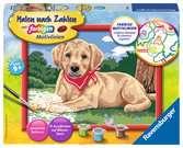 Süßer Labrador Malen und Basteln;Malen nach Zahlen - Ravensburger