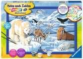 Tiere der Arktis Malen und Basteln;Malen nach Zahlen - Ravensburger