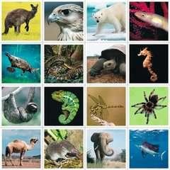 tiptoi® memory Rekorde im Tierreich - Bild 5 - Klicken zum Vergößern