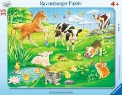 Tiere auf der Wiese - Bild 1 - Klicken zum Vergößern