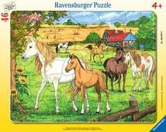 Puzzle cadre 30-48 p - Chevaux dans l'enclos - Image 1 - Cliquer pour agrandir