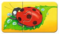 Tiere im Garten - Bild 10 - Klicken zum Vergößern