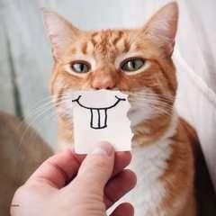 Funny Animal Portraits - image 2 - Click to Zoom