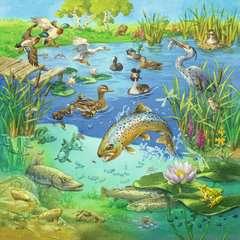Tiere in ihren Lebensräumen - Bild 2 - Klicken zum Vergößern