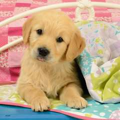 Cute Puppy Dogs - Billede 2 - Klik for at zoome