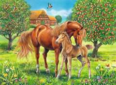 Pferdeglück auf der Wiese - Bild 2 - Klicken zum Vergößern