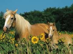 Pferdeglück - Bild 2 - Klicken zum Vergößern