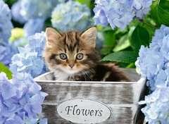 Kleine Katze - Bild 2 - Klicken zum Vergößern