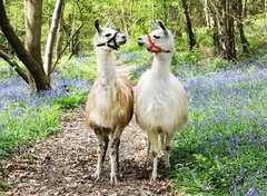 Llama Love - Billede 2 - Klik for at zoome