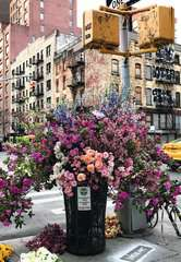 Flowers in New York - Bild 3 - Klicken zum Vergößern