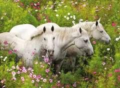 Pferde auf der Blumenwiese - Bild 2 - Klicken zum Vergößern