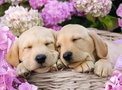 Cute Friends XXL300 - Billede 2 - Klik for at zoome