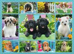 Cute Puppies, 500pc - Billede 2 - Klik for at zoome