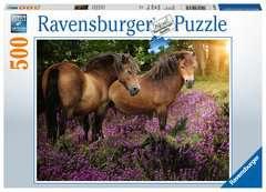 Pony's tussen de hei - image 1 - Click to Zoom