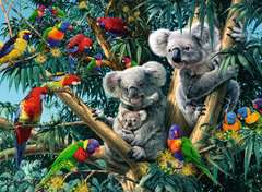 Koala's in de boom - image 2 - Click to Zoom