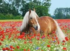 Paard tussen de klaprozen - image 2 - Click to Zoom