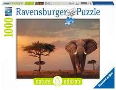 Elefant in Masai Mara National Park - Bild 1 - Klicken zum Vergößern