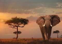 Elefant in Masai Mara National Park - Bild 2 - Klicken zum Vergößern