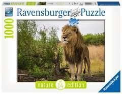 Stolzer Löwe - Bild 1 - Klicken zum Vergößern