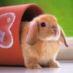 Dolce coniglietto - immagine 2 - Clicca per ingrandire