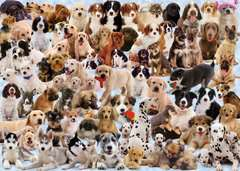 Dog's Galore! - image 3 - Click to Zoom
