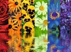 Floral Reflections - image 2 - Click to Zoom