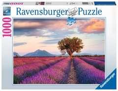 Lavendelfeld in der goldenen Stunde - Bild 1 - Klicken zum Vergößern