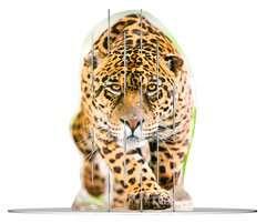 4S Vision Wild Cats - Bild 2 - Klicken zum Vergößern