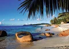 Unter Palmen - Bild 2 - Klicken zum Vergößern