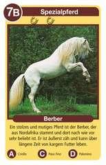 Pferde - Bild 2 - Klicken zum Vergößern