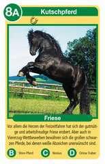 Pferde - Bild 3 - Klicken zum Vergößern