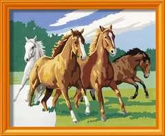 Wilde paarden / Chevaux sauvages - Image 2 - Cliquer pour agrandir