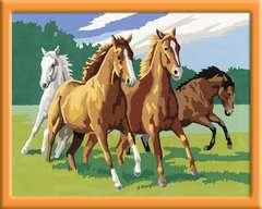 Wilde paarden / Chevaux sauvages - Image 3 - Cliquer pour agrandir