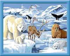 Dieren op Antartica / L´Antarctique - Image 2 - Cliquer pour agrandir