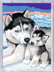 Husky Kuss - Bild 2 - Klicken zum Vergößern