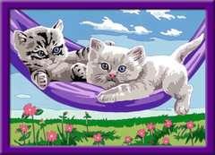 Kätzchen in der Hängematte - Bild 2 - Klicken zum Vergößern