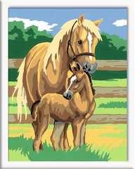 Paardenliefde - image 2 - Click to Zoom