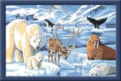 Tiere der Arktis - Bild 2 - Klicken zum Vergößern