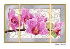 Wilde Orchidee - Bild 3 - Klicken zum Vergößern