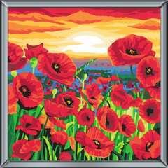 Wildblumenfeld - Bild 3 - Klicken zum Vergößern